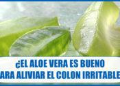 ¿Es bueno el Aloe vera para el Colon Irritable?